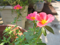 Img_0019a